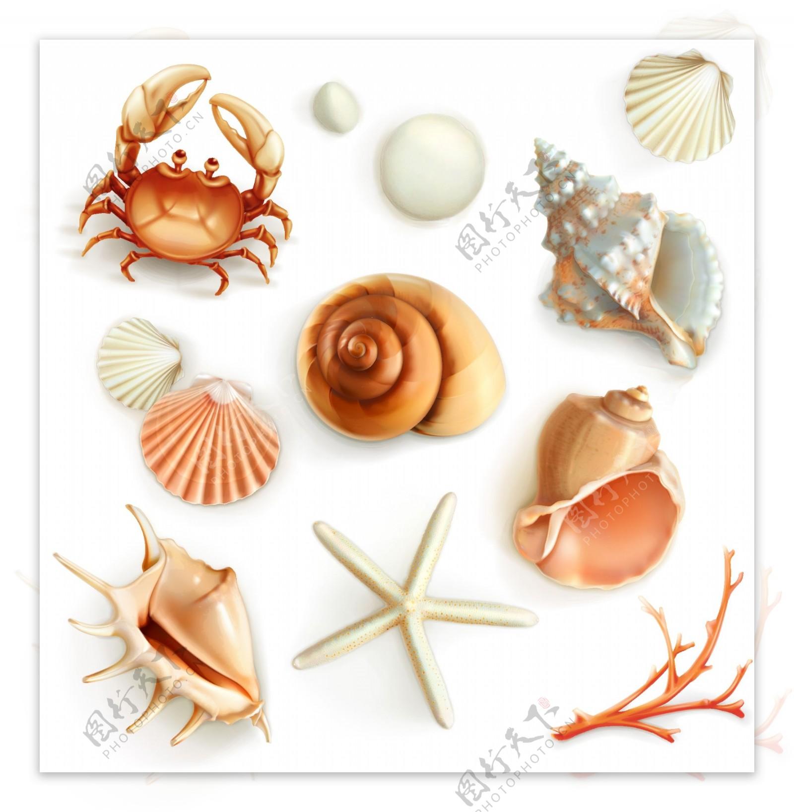 海洋生物插画